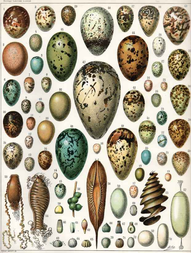 As eggs come in different sizes and shapes, so do design ideas.
